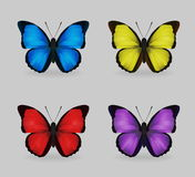 充满活力的multy颜色昆虫蓝色morpho蝴蝶 库存例证