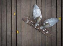 先生和Duck夫人在木地板上的 库存图片
