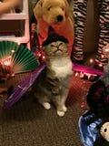 先生 弗雷德虎斑猫作为万圣夜巫婆棒 免版税库存图片