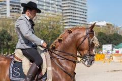 先进的驯马测试 免版税库存图片