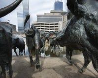 先驱广场牛雕塑在达拉斯, TX 库存照片
