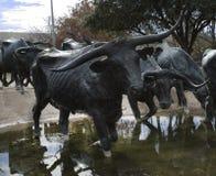 先驱广场牛雕塑在达拉斯TX 图库摄影