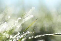 光亮的早晨露水抽象背景  免版税图库摄影