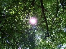 光亮的阳光结构树 库存照片