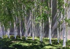 光和树荫 免版税库存照片
