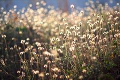 光和自然 免版税库存照片