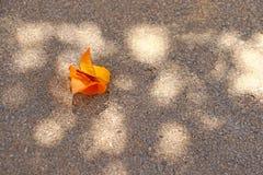 光和阴影在一条边路有花的 图库摄影
