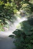 光和雾在森林里 库存图片