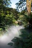 光和雾在森林里 免版税库存图片