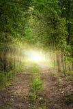 光在一条树木繁茂的森林道路结束时 免版税库存图片