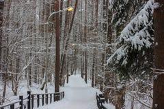 光在冬天寒冷的黄色温暖的光温暖的冬天森林里照亮路 创造温暖和舒适 浪漫 库存照片