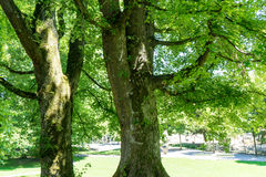 光在树下 免版税库存图片