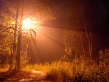 光在森林里 库存照片