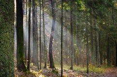 光在森林里 免版税库存照片