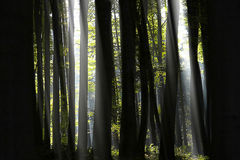 光在森林里 库存图片