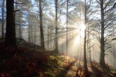光在森林里 免版税库存图片