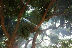 光在烟森林里 免版税库存照片