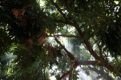 光在烟森林里 库存照片