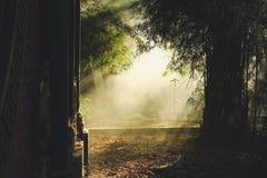 光在竹树中的 库存图片