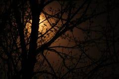 光在黑暗中 免版税图库摄影