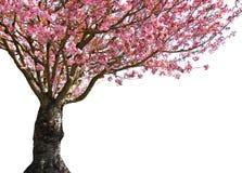 光彩的春天 免版税库存照片