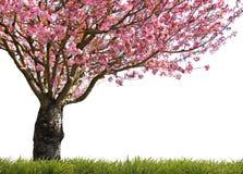 光彩的春天 库存图片