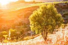 光打破剧烈的天空在日落并且击中了在小山的一棵孤零零树 库存图片