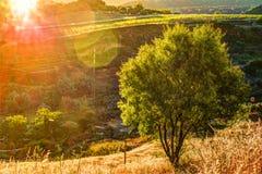 光打破剧烈的天空在日落并且击中了在小山的一棵孤零零树 免版税库存图片