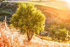 光打破剧烈的天空在日落并且击中了在小山的一棵孤零零树 图库摄影