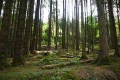 光放光的低谷树 免版税图库摄影