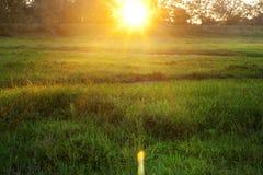 光束到农村绿色晚上草甸里 免版税图库摄影