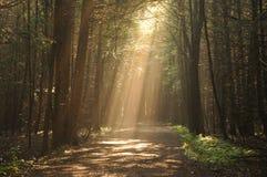 光束发光在安大略的一条森林道路 免版税库存照片