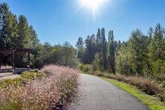 光束和轻的亮光在桃红色野花和道路 图库摄影