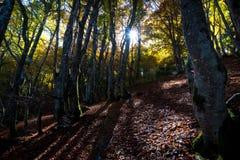 光束在森林里在奥韦涅 免版税库存照片
