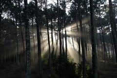 光束在森林里 免版税库存图片