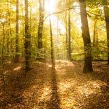 光束在森林里 免版税库存照片