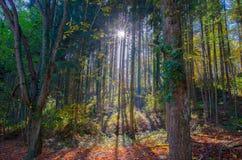 光束在秋天森林里 库存图片