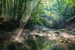 光束在美丽如画的森林在水表面发光 免版税库存图片