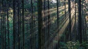 光束在黑暗的森林里 免版税图库摄影