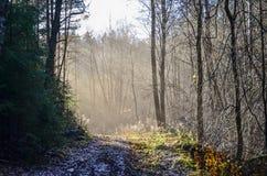 光束照亮光秃的树 免版税图库摄影