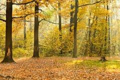 光束照亮的森林沼地  图库摄影