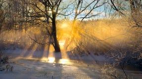 光束过滤光秃的树 库存照片