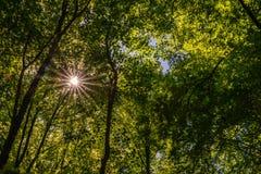 光束通过绿色树梢,费尔贝特 免版税库存照片
