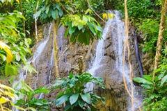 光滑的岩石的流动的瀑布与绿色叶子 免版税库存照片
