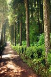 光滑的道路穿过森林,圣地米格尔海岛 库存图片