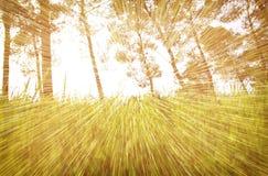 光爆炸抽象照片在树和闪烁bokeh中的点燃 图象被弄脏并且被过滤 库存图片