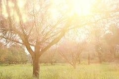 光爆炸抽象照片在树和闪烁bokeh中的点燃 图象被弄脏并且被过滤 免版税图库摄影