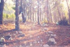 光爆炸抽象照片在树和闪烁bokeh中的点燃 被过滤的图象 库存照片