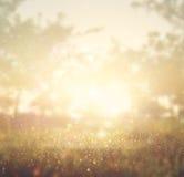 光爆炸抽象照片在树和闪烁bokeh中的点燃 免版税库存图片