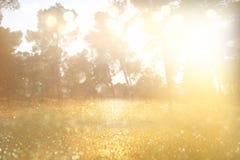 光爆炸抽象照片在树和闪烁bokeh中的 库存图片